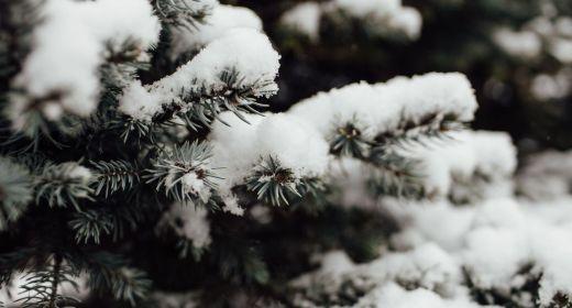 Rozsvícení vánočního stromu 7.12.